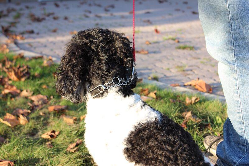 dog collar position