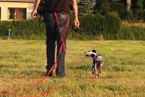 Dog Training Long Line
