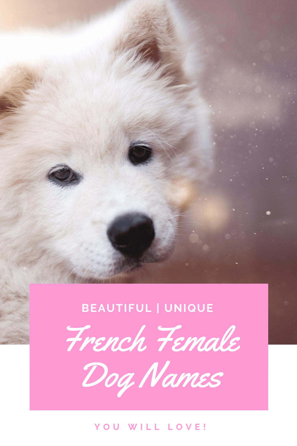 French female dog names