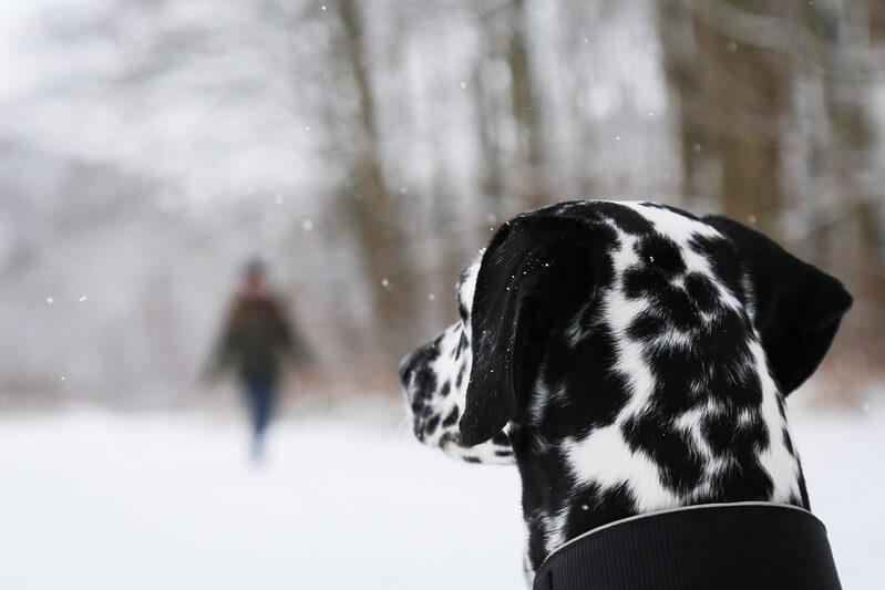 advanced dog training skills