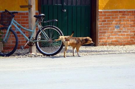 dog marking behavior