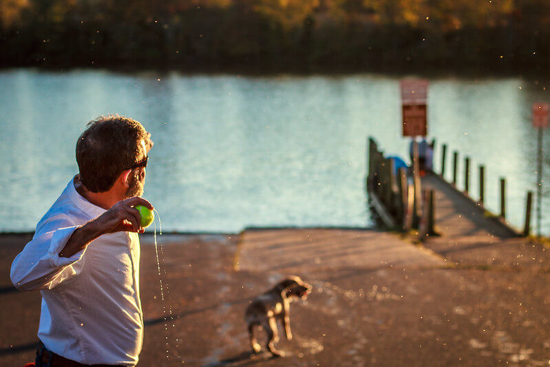 teach your dog to fetch