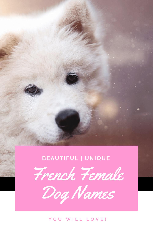 French female dog names