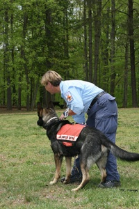 Search and Rescue Dog in Training