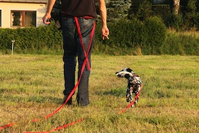 Dog Training Long Line