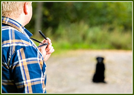 Using a dog training whistle off leash