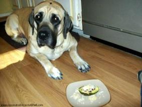 house training dog