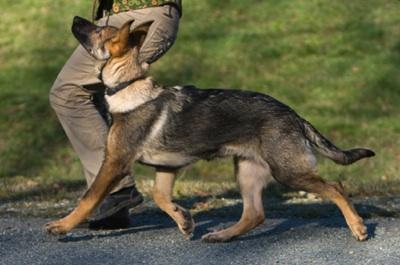 Dog Leash Training and Heeling