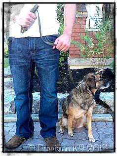 Heel Position in Dog Training