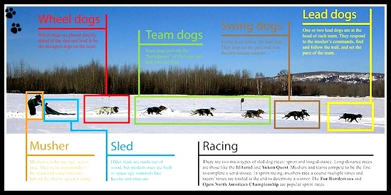 Dog Sledding Team Details