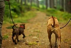 Dog Care and Training