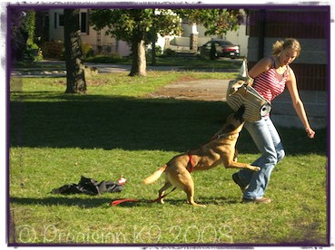 personal dog trainer