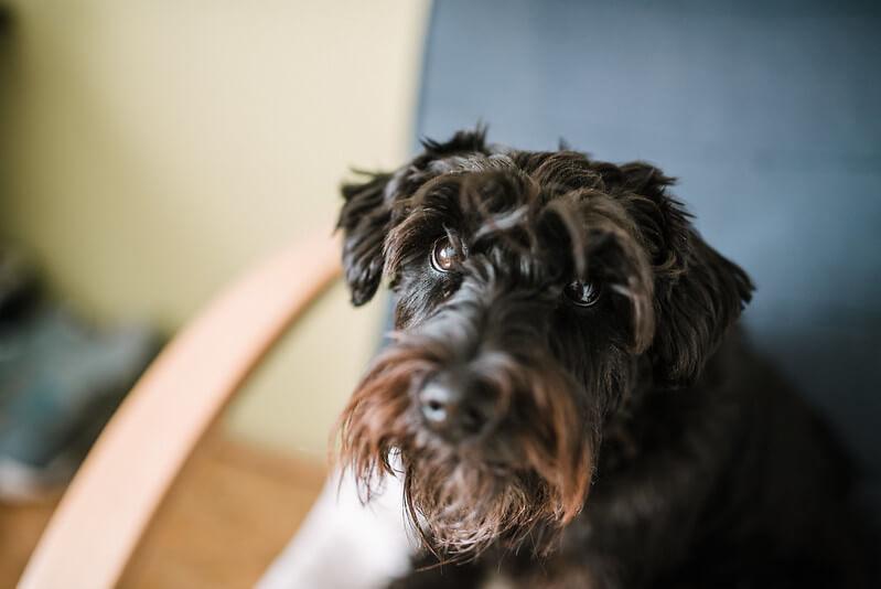 black dog names