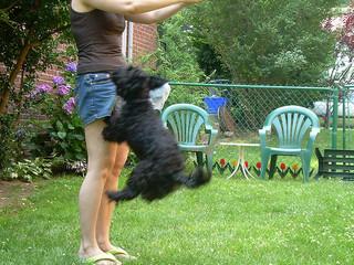 Small Dog Jumping