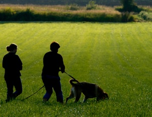 Tracking Dog Training