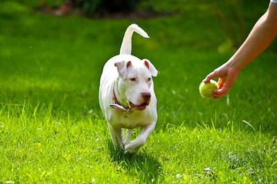 Training A Deaf Dog Training A Blind Dog Overcoming The Problems
