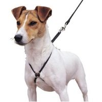 Lupi Harness for Dogs