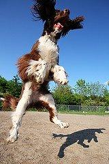 Dog Jumping High