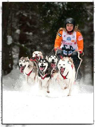Dog Sledding Team