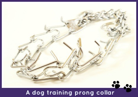 Prong training collar.