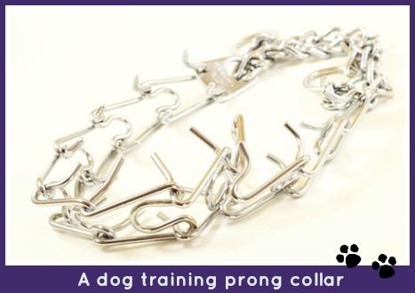 Prong collar.
