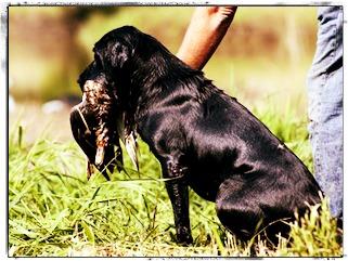 Dog Retrieving