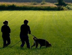 Tracking Dog Training